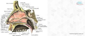 Деформация носовой перегородки, синехии и атрезии носовой полости