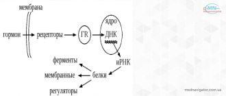 Гормоны и механизм их действия
