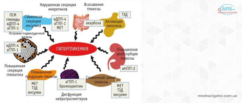 Принципы патогенетической терапии сахарного диабета у пожилых